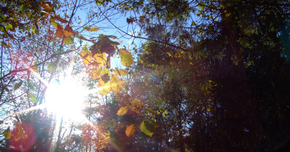 The sun breaks through a leafy canopy, overlaying a six-pointed lens flare on golden-green leaves and blue sky