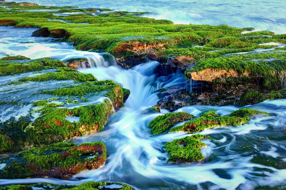 A briskly frothing river winds between verdant, plant-covered rocks